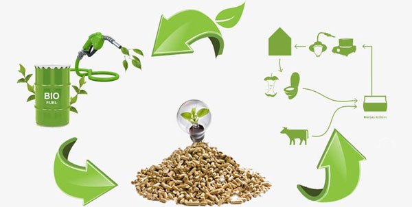 Biomass Pellet Machine Helps to Energy Saving and Emission Reduction