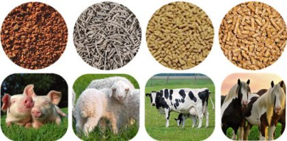 What affects the output of feed pellets?